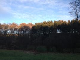 Laubwald und Nadelwald vor blauem Himmel