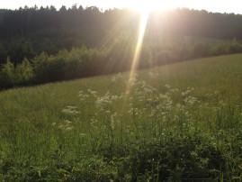 Wiese, Wald, Sonnenstrahlen
