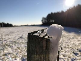 Zaunpfahl aus Holz mit einer Haube aus Schnee, im Hintergrund Wald und Wiese